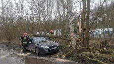 Silny wiatr łamie drzewa na Pomorzu (e-kg.pl)