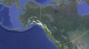 Alaska: atak niedźwiedzia w toalecie